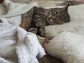 Harley tucked in sleeping