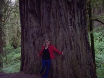 Redwood Forest, CA - Gina Lockhart